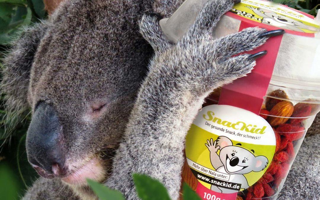 Was essen Koalas? Erfahren Sie alles über Nahrung und Lebensraum